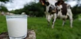 S.O.S lait et produits laitiers !